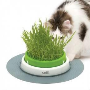 Catit Senses 2.0 Cat Grass Kit 3Pc Recarga