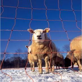 Malla eléctrica para ovejas 50 m 90 cm