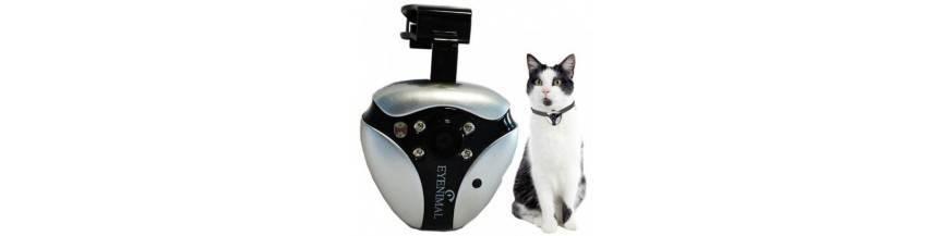 CAT VIDEOCAM GATOS