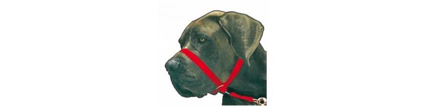 Collar Bozal