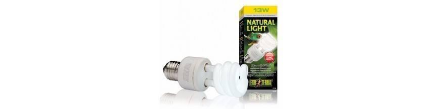 NATURAL LIGHT  REPTIL